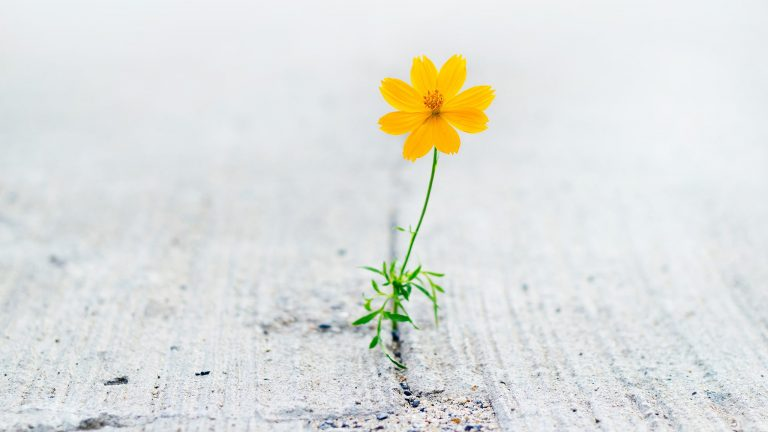 Photograph Of An Orange Flower Growing In A Crack On A Sidewalk Signifying Loneliness And Isolation
