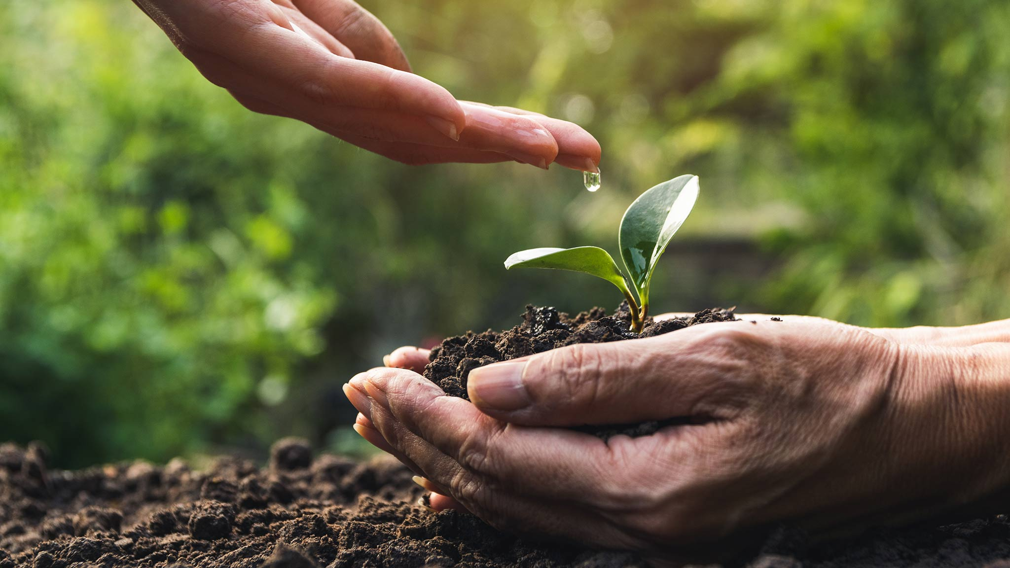 Photo Of A Young Hand Dripping Water Onto A Baby Plant In Dirt Held By Elderly Hand, Young Helping Old Concept