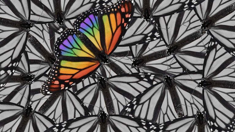 Black And White Collage Of Crowd Of Butterflies With Single Butterfly Standing Out In Full Color